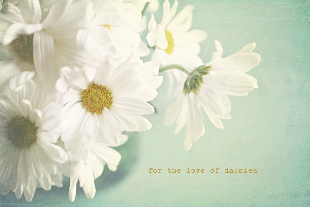for-the-love-of-daisies-web